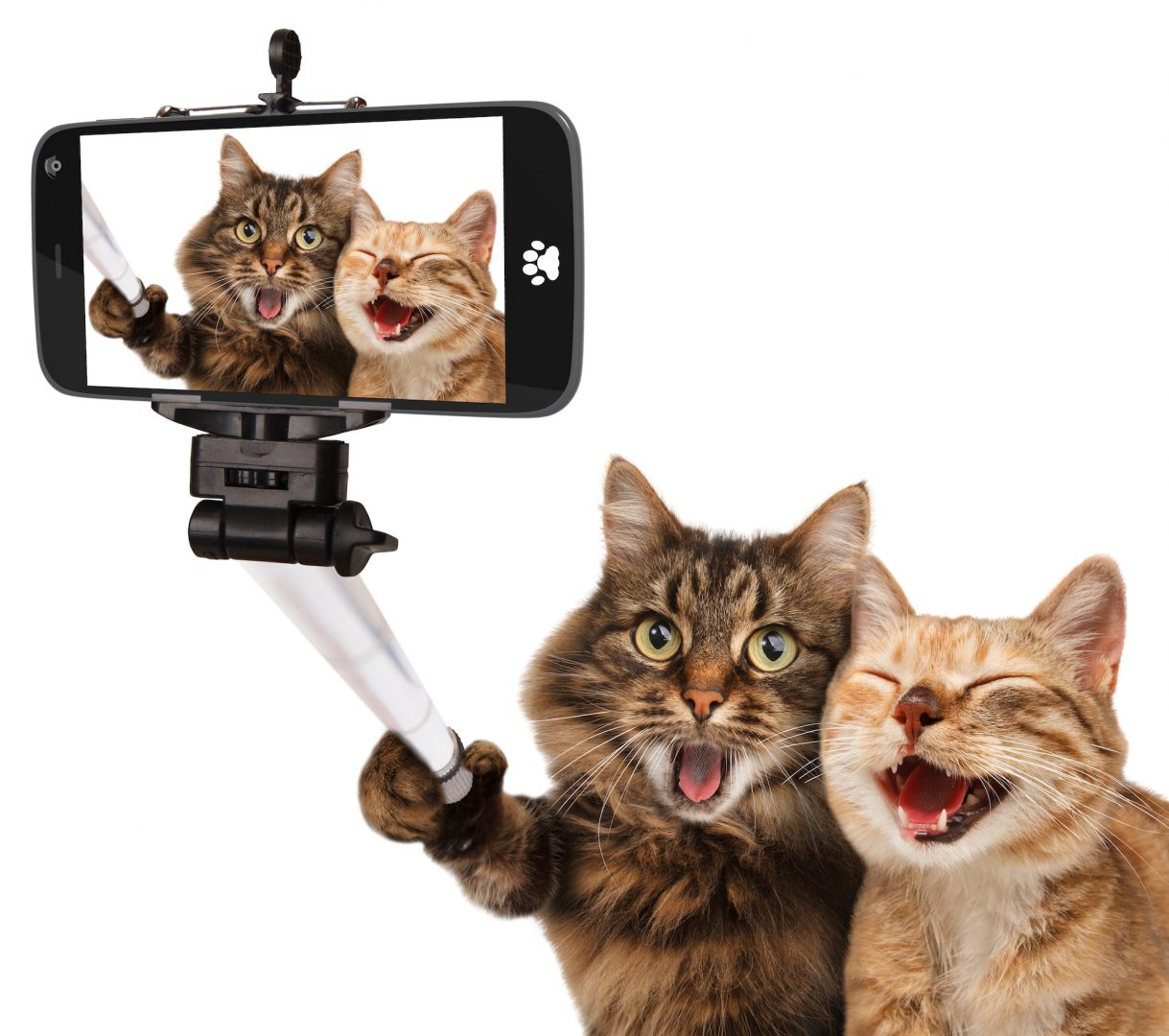 猫が2匹でスマホ自撮りしている