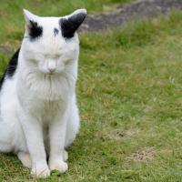 目を閉じる猫_反省